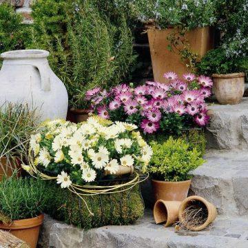 Prächtige Kübelpflanzen für draußen