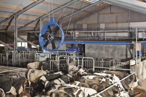 Hitzestress vermeiden durch Ventilatoren im Kuhstall