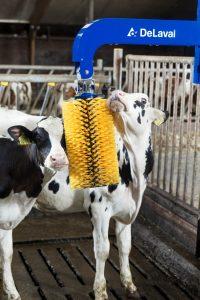 Wellness und Wohlbefinden für die Tiere