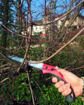 Der richtige Zeitpunkt für den Obstbaumschnitt