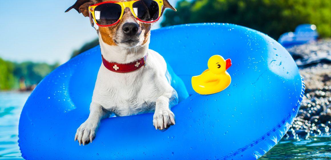 """""""Cool"""" den Urlaub und die heißen Tage genießen – hier ein paar Tipps für unsere Hunde!"""