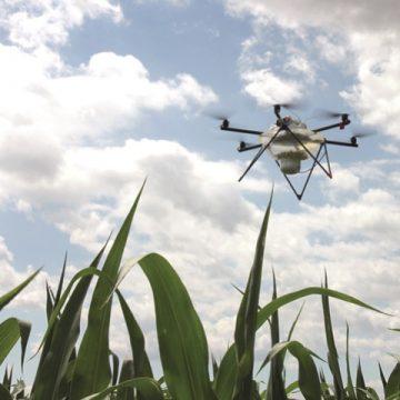 Drohneneinsatz gegen den Maiszünsler