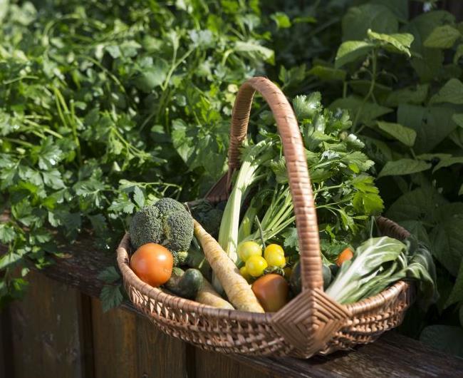 Dein Gemüsegarten: 6 Tricks zum Ernteglück