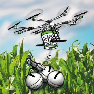 Biologische Maiszünsler Bekämpfung