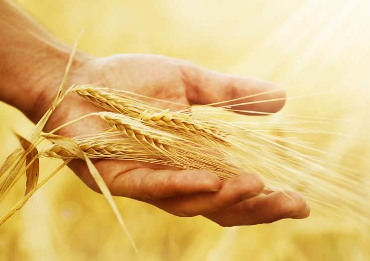 Anbauverhalten österreichischer Landwirte