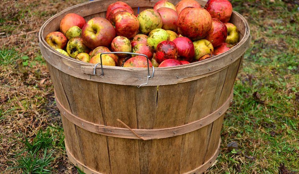 Herbstzeit ist Apfelmost-Zeit