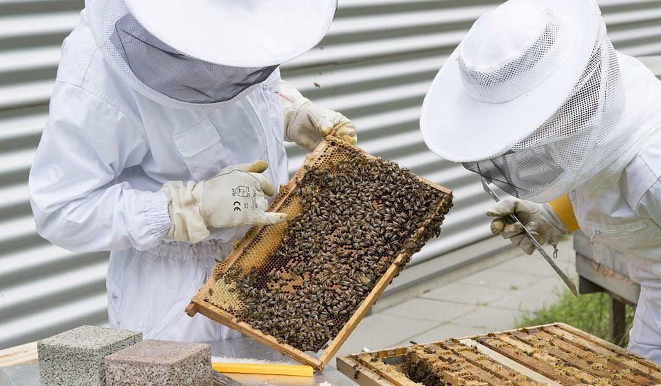Im Lagerhaus fleißige Bienen mieten