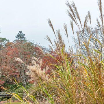 Gartentipps Oktober