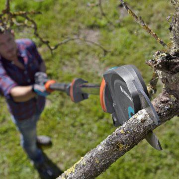 Baumpflegekurs in Theorie und Praxis