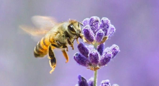 5-Sterne-Hotels für Wildbienen