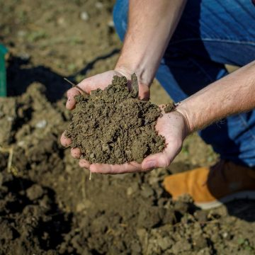 Lagerhaus fördert heimischen Humusaufbau