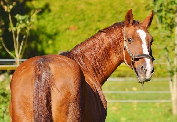 Perfekte Pflege für Ihr Pferd